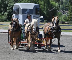 aslternativ hestetransport