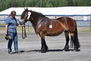Bergrosa dagens hest